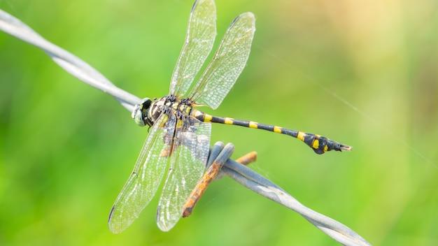 トンボの目と翼のディテールの表示。マクロ撮影、美しい自然のシーンのトンボ。
