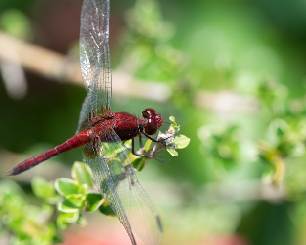Dragonfly sit on a branch