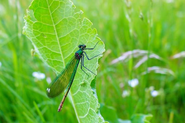 Стрекоза сидит на зеленом листе растения в летний день