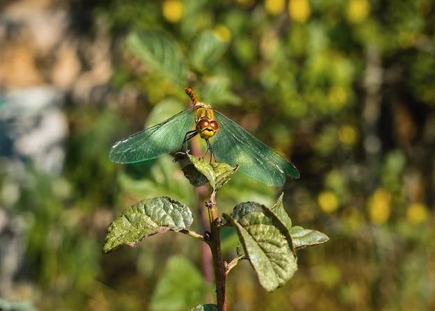 自然の中で枝の昆虫に座っているトンボ
