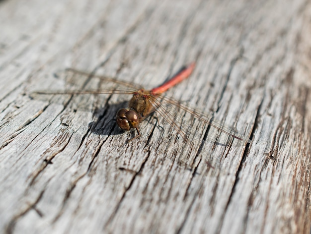 Dragonfly on wood surface closeup