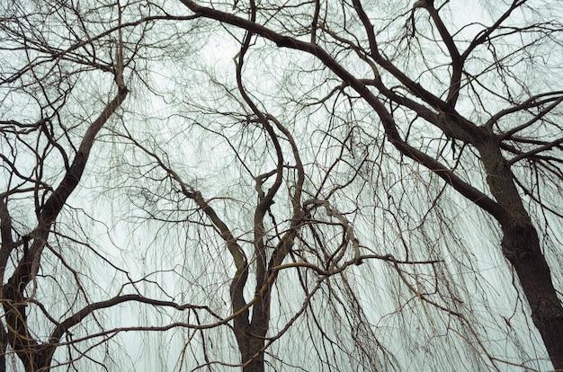 灰色の秋の空の上の劇的な裸の柳の木