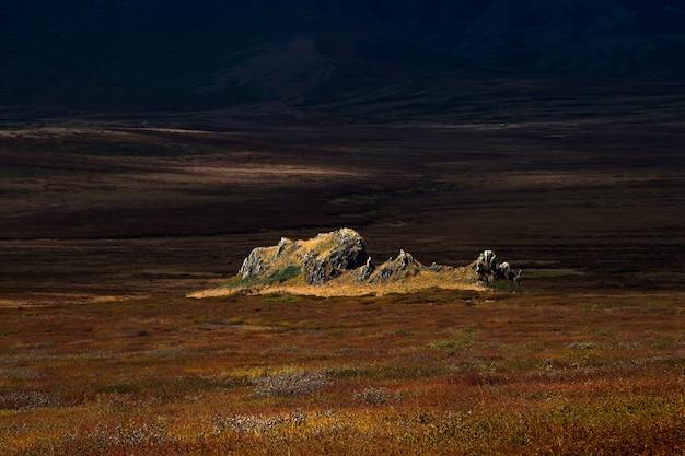 Драматический золотой свет и тень на скале в осенней степи. горный алтай.