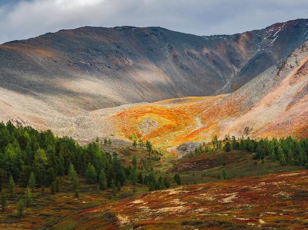 Драматический золотой свет и тень на скале в осенней степи. высокогорное плато. атмосферный осенний горный пейзаж. панорамный пейзаж с опушкой хвойного леса и горы