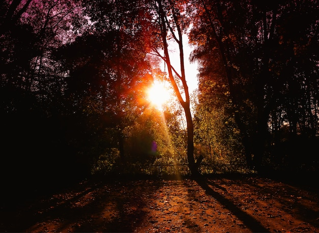 Dramatic light ray at autumn park background
