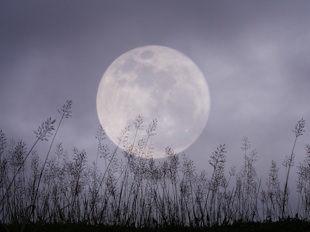 Dramatic night sky with full moon and meadow for halloween background.