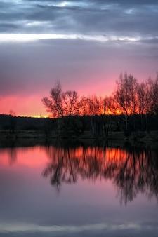 森の湖の劇的なピンクの夕日と地平線に裸の木のシルエット