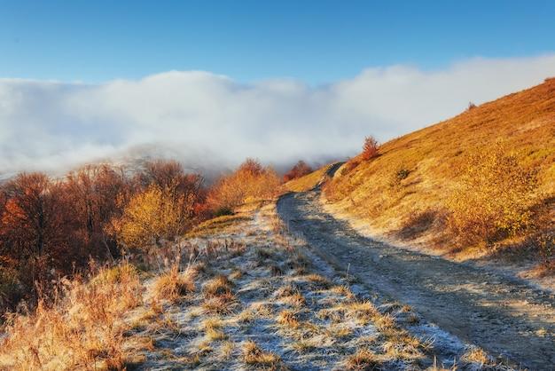 The dramatic scene autumn in the carpathians.