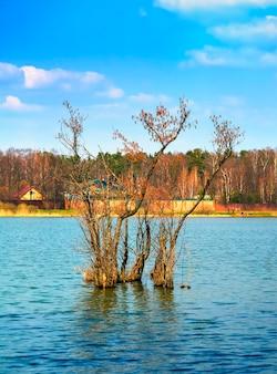 Эффектное дерево прямо на фоне реки