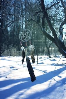 겨울 자연 배경 공원에서 나무 가지에 매달려 꿈 포 수.