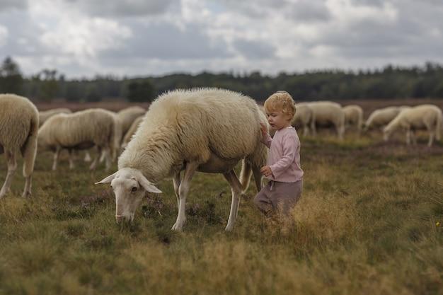 농장에서 양을 쓰다듬는 사랑스러운 백인 소녀의 꿈꾸는 듯한 사진
