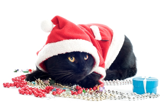 Dressed black cat with santa claus costume