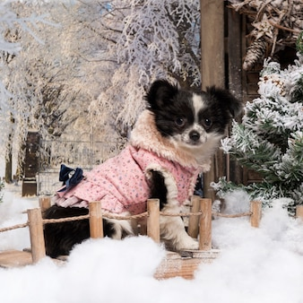 Одетый щенок чихуахуа сидит на мосту в зимнем пейзаже