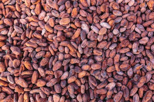 乾燥および天日干しのカカオ豆の背景