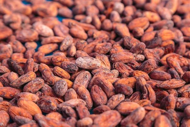 Сушеные и вяленые какао-бобы