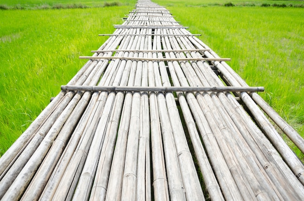 Dried bamboo bridge for across the green rice field