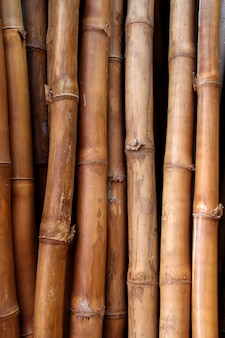 Dried bamboo cane trunk texture