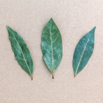 Dried bay leaf on the brown background.
