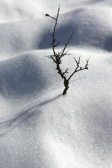 Dried branch lonely tree metaphor snow winter dunes desert