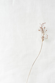 Dried branch on a white paper