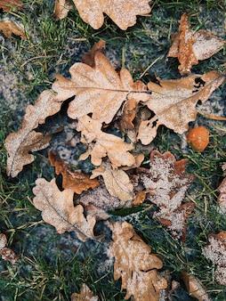 말린 갈색 단풍이 푸른 잔디 위에 놓여 있고 눈이 있습니다.