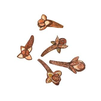 花と葉の乾燥クローブボタニカルイラスト。強壮剤やスパイシーな植物のコレクション。