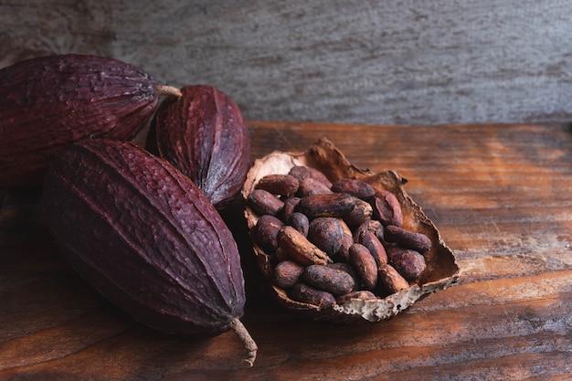乾燥カカオ豆と乾燥カカオ豆