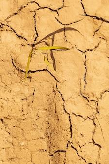 말린 금이 간 흙 토양 질감 배경. 햇볕이 잘 드는 건조 토양의 모자이크 패턴