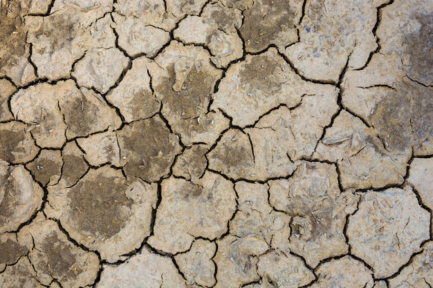 Dried earth because of rain dose not fall and the land lacked of water for agriculture.