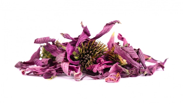 Dried echinacea flowers, isolated on white