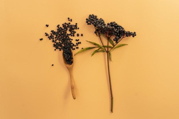 乾燥したニワトコの植物とベリー
