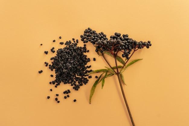 ベージュの表面に乾燥したニワトコ植物