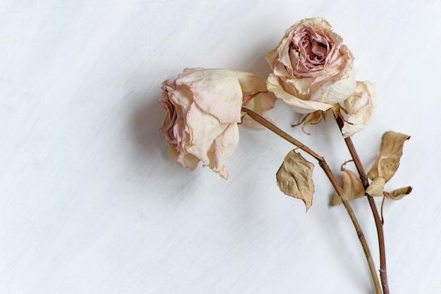 白いピン留め紙の上の乾燥した色あせたバラ