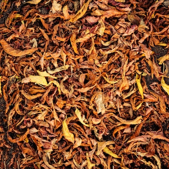 Dried fallen autumn leaves background