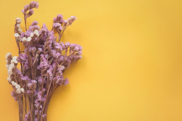 Dried flower on yellow background with copy space.
