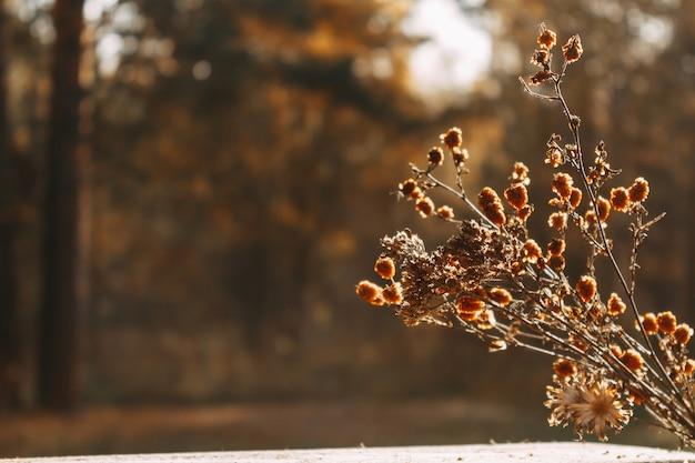 말린 꽃이 가을 숲을 배경으로 탁자 위에 놓여 있습니다. 선택적 초점입니다. 따뜻한 가을의 개념입니다.