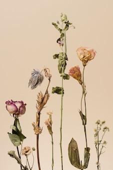 Dried flowers on a beige background