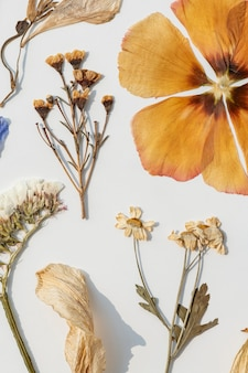 Dried flowers collection on a white wall