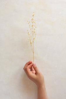 천연 매니큐어로 여성의 손에 말린 꽃. 최소한의 식물표본관 잎. 베이지색 파스텔 배경에 사진입니다.
