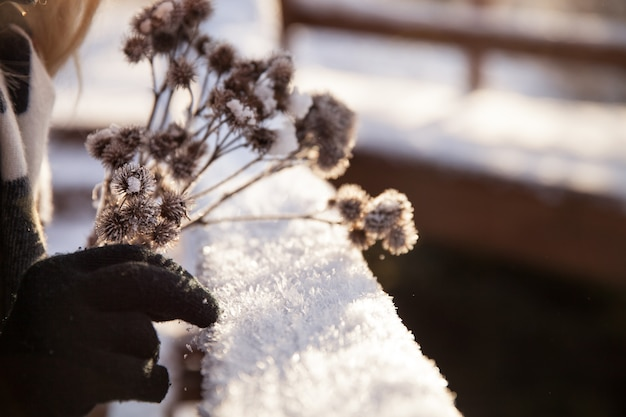 背景の木製の梁に凍るような雪の日に女の子の手にドライフラワー