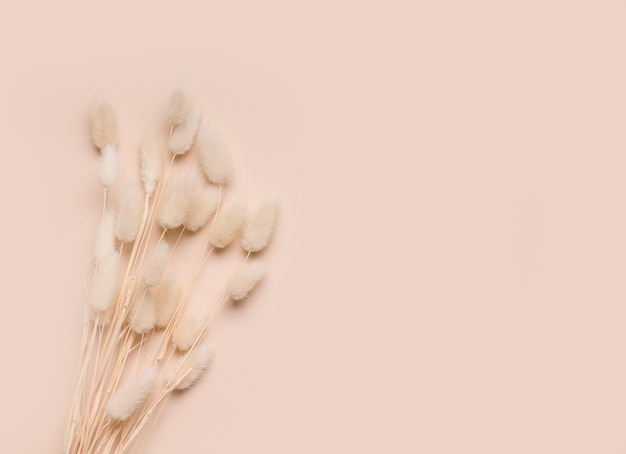 베이지 색에 말린 된 꽃