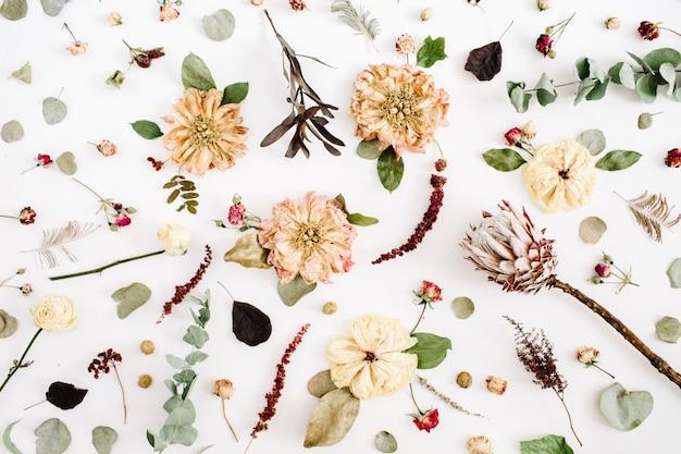 ドライフラワーのテクスチャパターン:ベージュの牡丹、プロテア、ユーカリの枝、白のバラ
