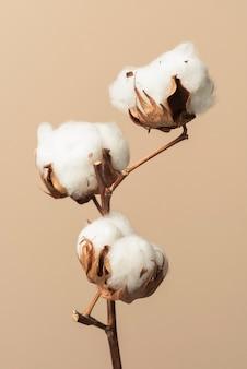 Dried fluffy cotton flower branch on a beige background