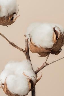 베이지색 배경에 말린 솜털 면 꽃 가지