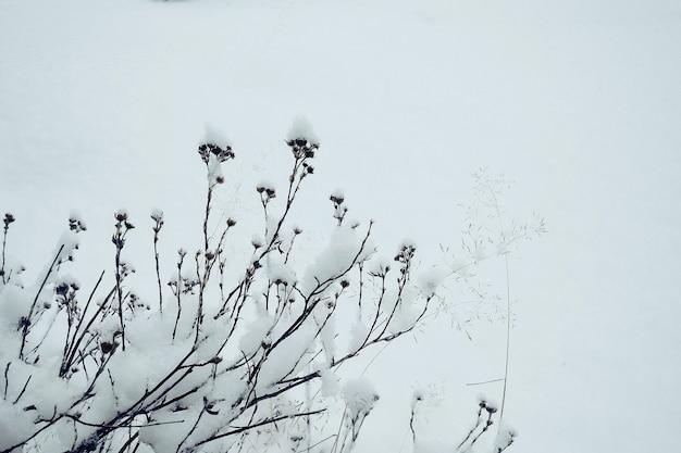 真っ白な雪の吹きだまり、抽象的な冬の背景の乾燥した凍った花明るい冬の背景、コピースペース、バナー