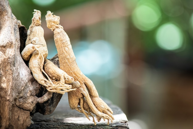 Dried ginseng on blurred nature.