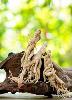 Dried ginseng on nature background.