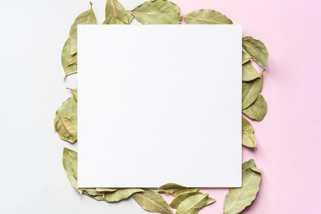 正方形のフレームコンセプトfで柔らかい色の背景表面に緑茶の葉を乾燥