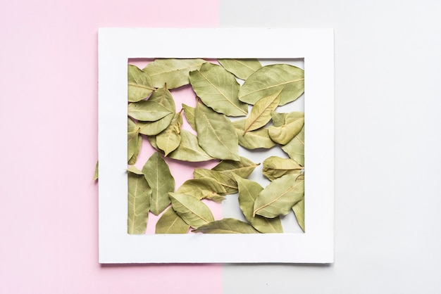 Dried green tea leaves on soft color background.