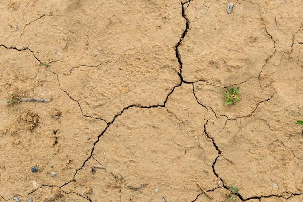 Dried ground covered with cracks